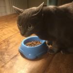 kattenvoer vlees referentie