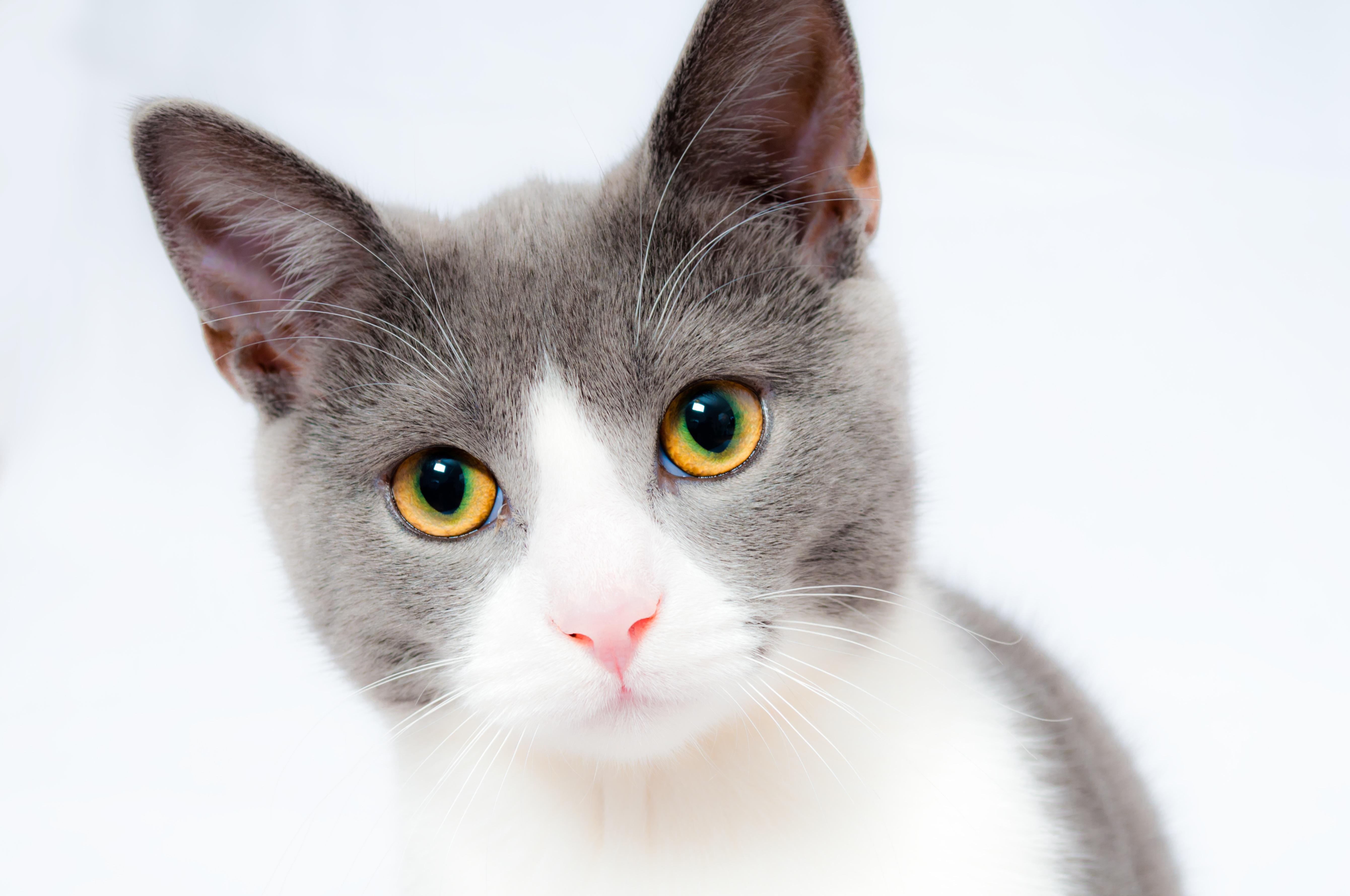 Proefpakket Kattenvoer