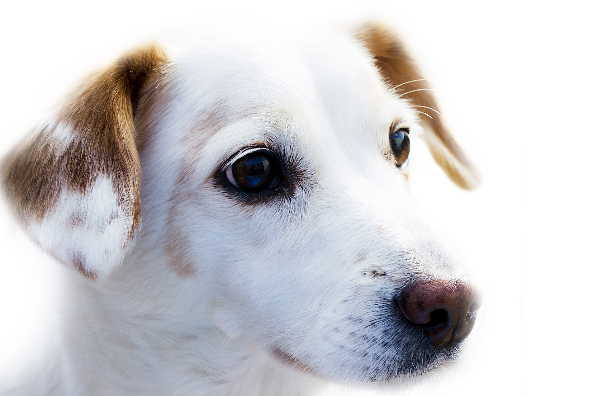 Proefpakket Hondenvoer