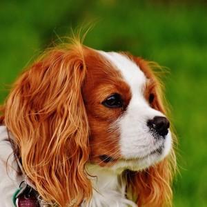 Welby hondenvoer smaakgarantie