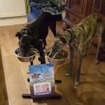 windhonden eten graanvij hondenbrokken zalm